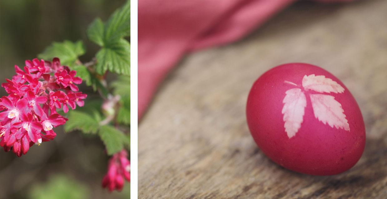 bedruckte Eier