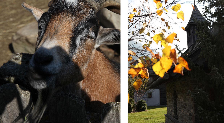 Tiere im Moserhof